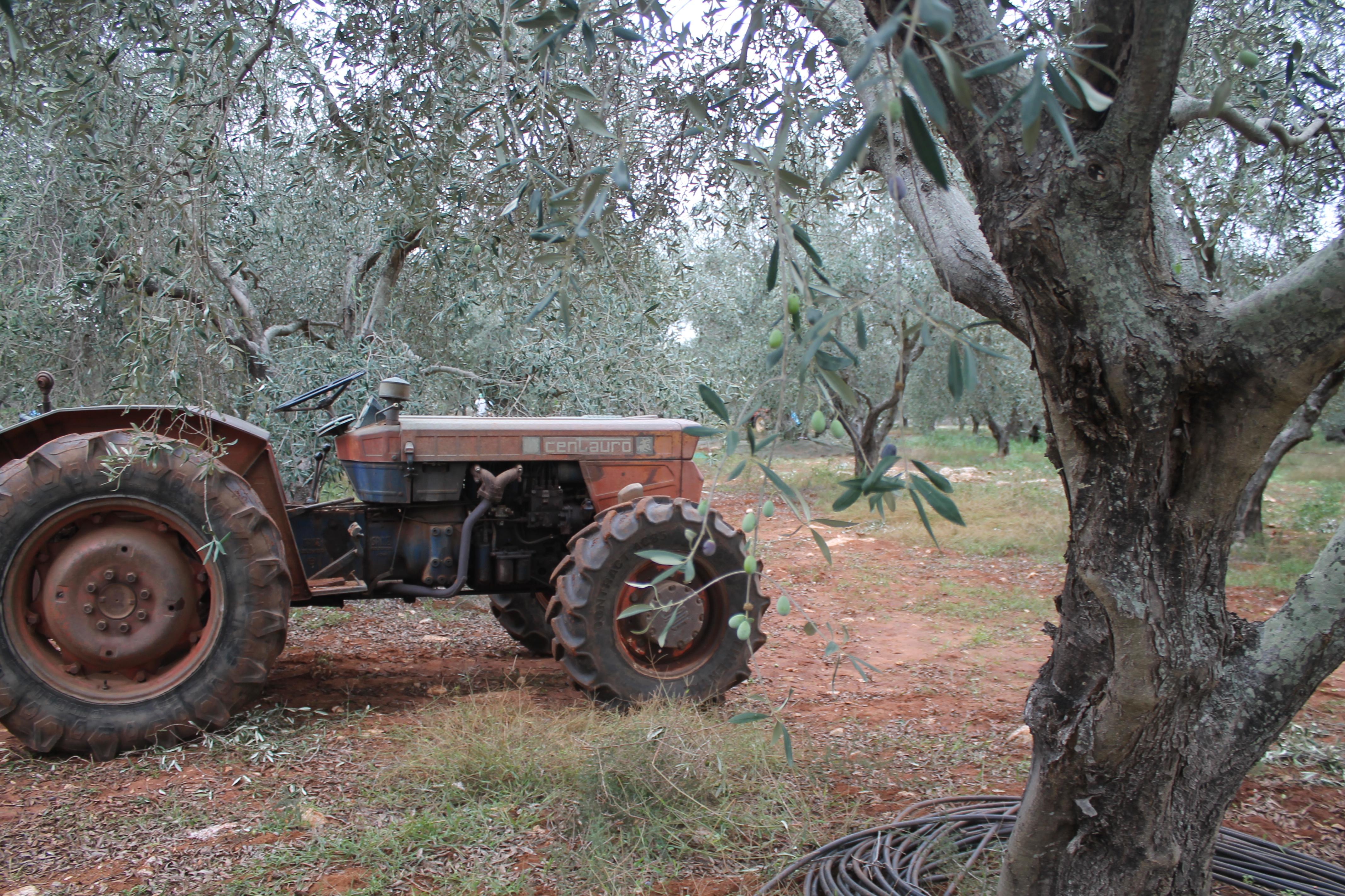 olivi e un trattore