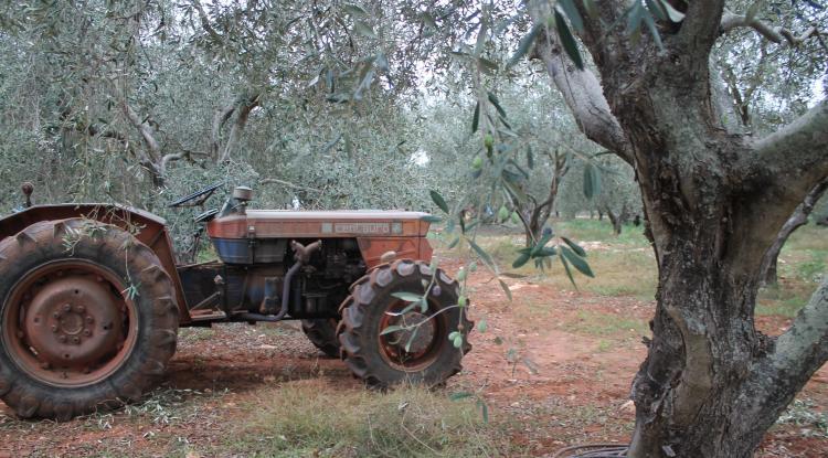 olivi e trattore